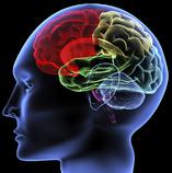 Art Neurociencia